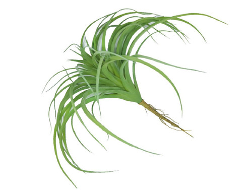 "Tillandsia Soft Touch 11"" Green Set of 3"