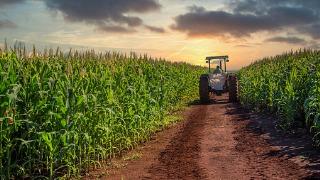 Tractor in summer