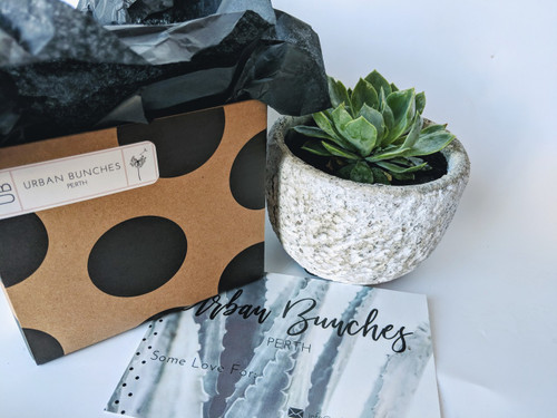 Succulent with Stone Planter