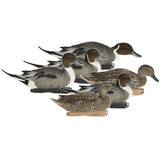 Avery ProGrade Fully Flocked Pintails 6pk