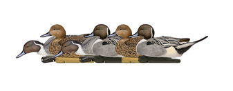 Avian-X TopFlight Pintail Decoys-6pk
