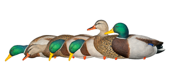 TopFlight Full Body Mallards