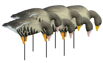 APEX Full-Size Full-Body Feeder Pk, Specklebelly 6 Pack