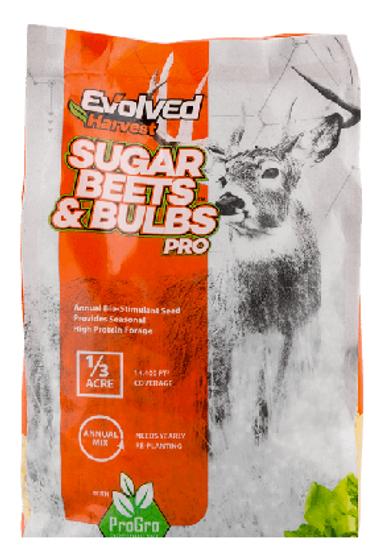Sugar Beets & Bulbs