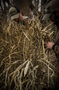 Higdon Blind Grass 4'x5' Sheets 4pk