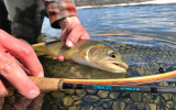 ​6 Steps to Fishing Dry Flies Effectively