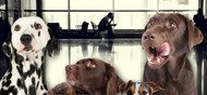 This Airport Terminal is Going to the Dogs
