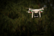 Drones and Wildlife: The Good, the Bad, and the Uncertainty