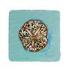 Aqua Sand Dollar Coasters - Set of 4