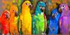 Pretty Parrots Outdoor Canvas Art