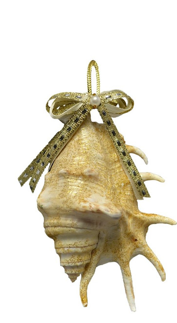 """Lambis Ornament with Gold Bow - 3-5"""""""
