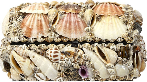 Natural Seashell Treasure Box - 6""