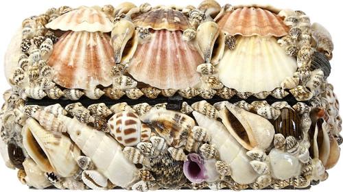 """Natural Seashell Treasure Box - 6"""""""