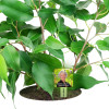 Lush Greens Personalized Memorial Garden Plant Stake