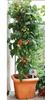 Golden Flourish Personalized Memorial Garden Plant Stake