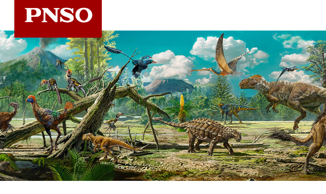 PNSO animal figurines main header