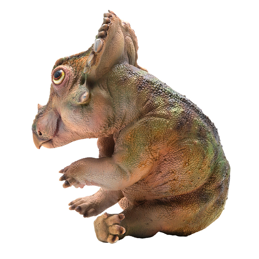 PNSO A-Qi The Young Sinoceratops side view