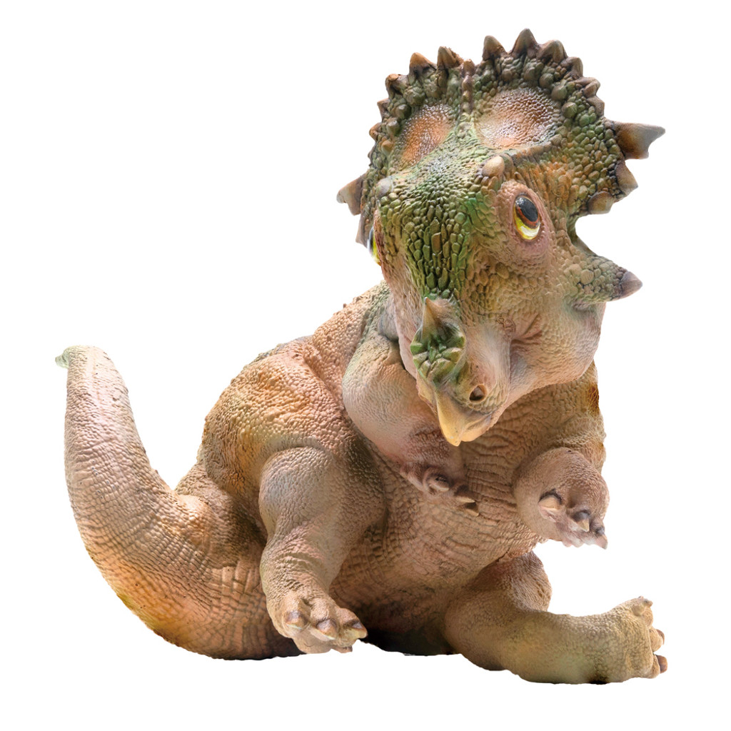 PNSO A-Qi The Young Sinoceratops front view