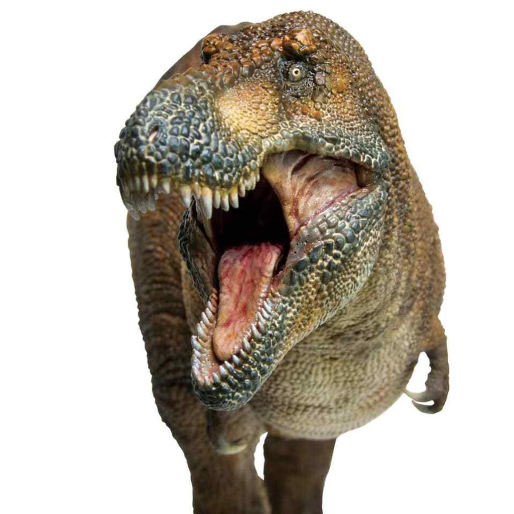PNSO Wilson The Tyrannosaurus Rex