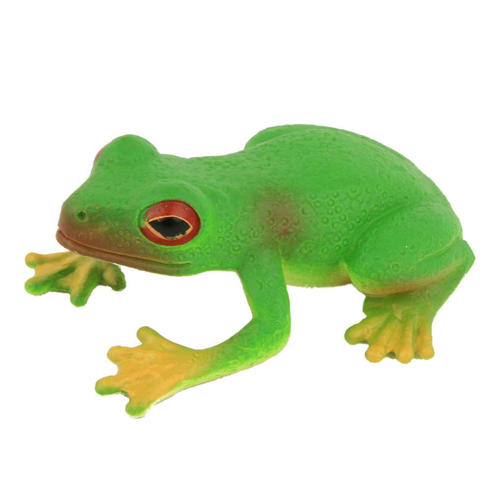Small Red Eyed Green Tree Frog