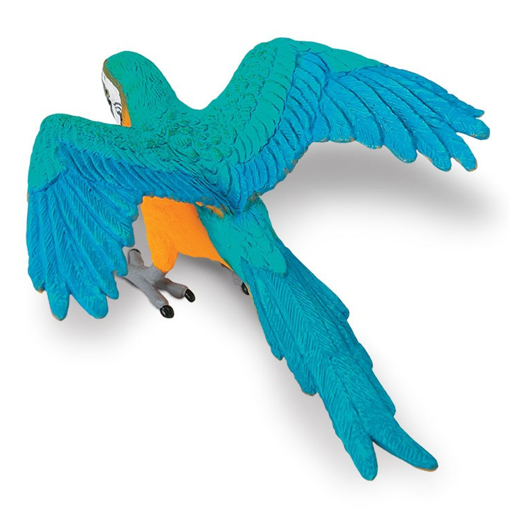 Blue and Gold Macaw Safari