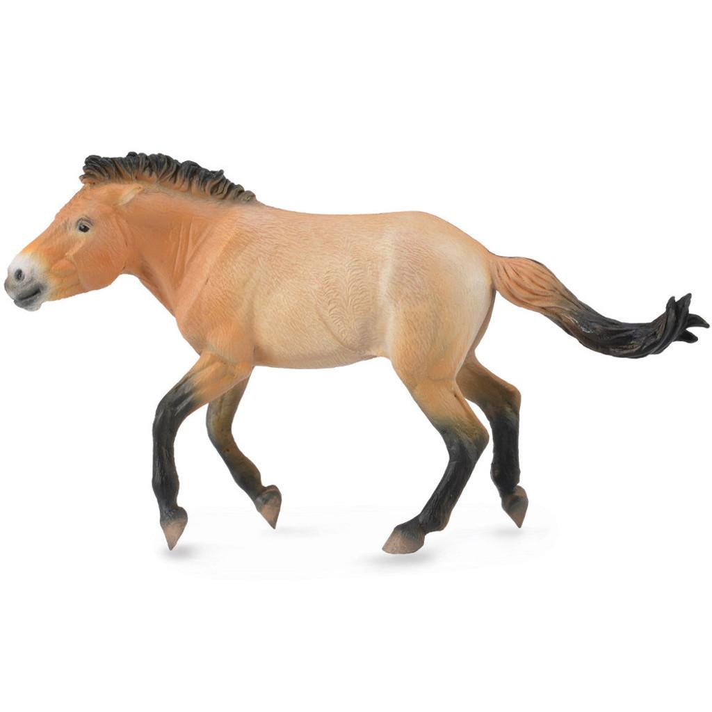 CollectA Przewalski Stallion