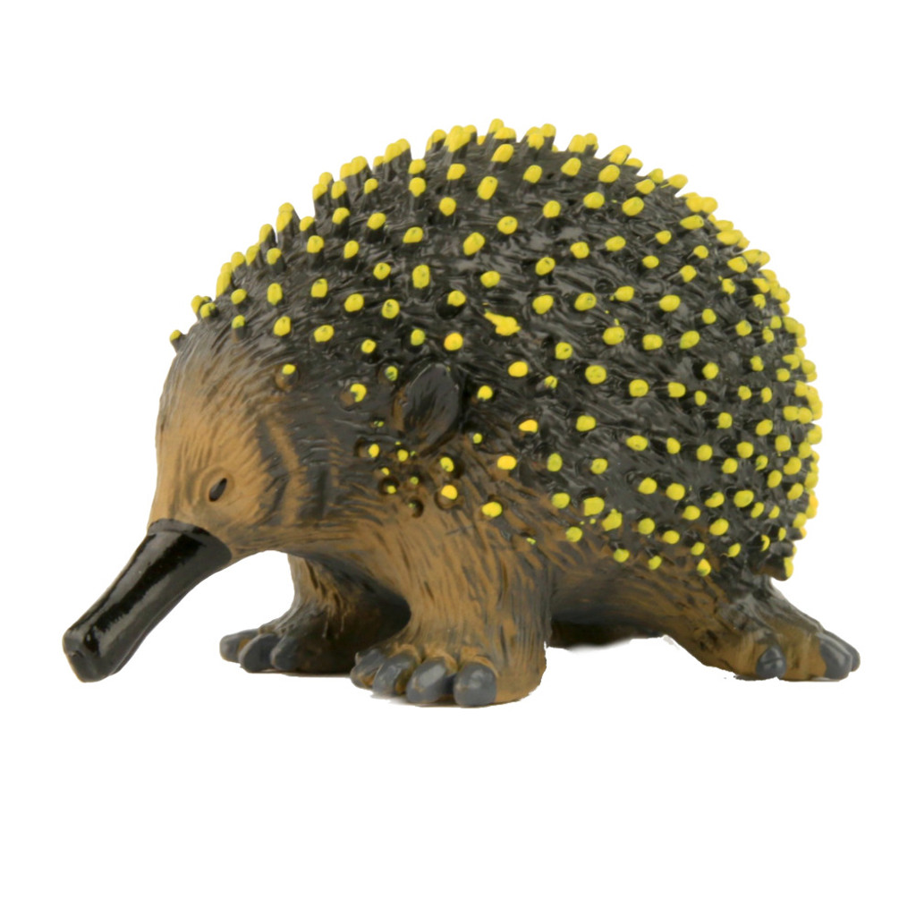 Science and Nature Small Echidna