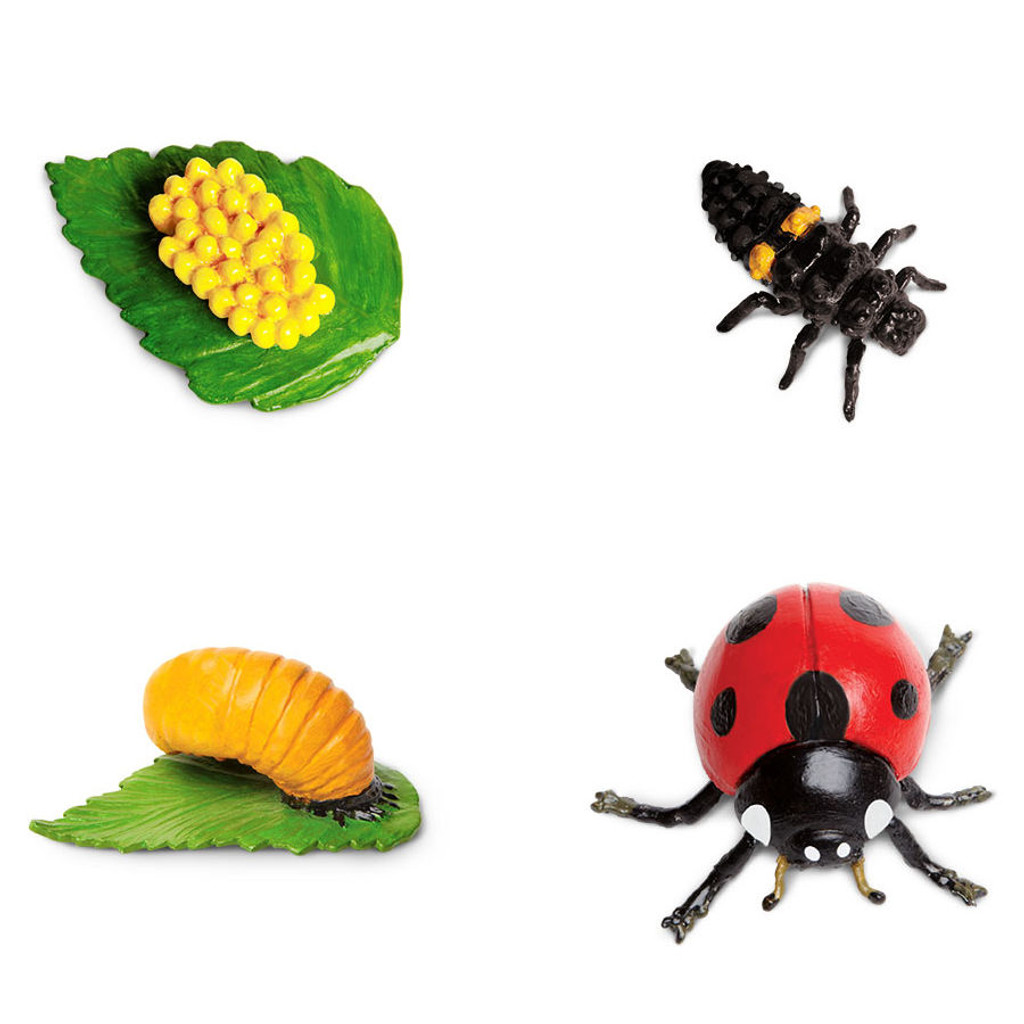 Safari Ltd Life Cycle of a Ladybug