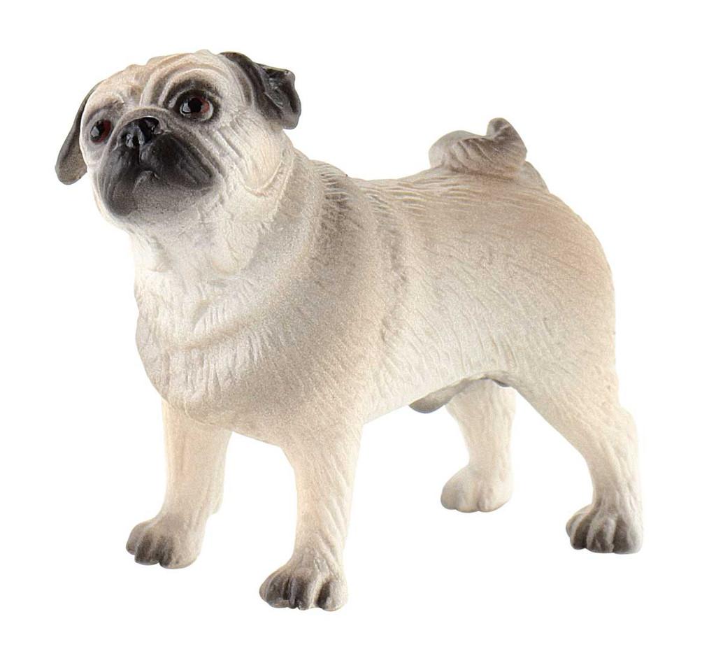 Pug Percy