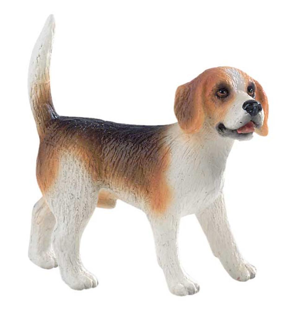 Beagle Henry