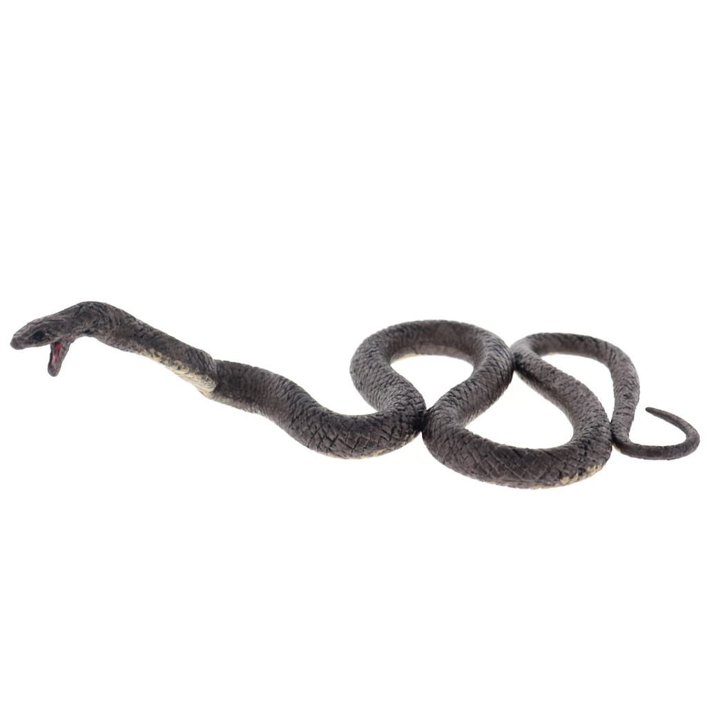 Science and Nature Brown Snake