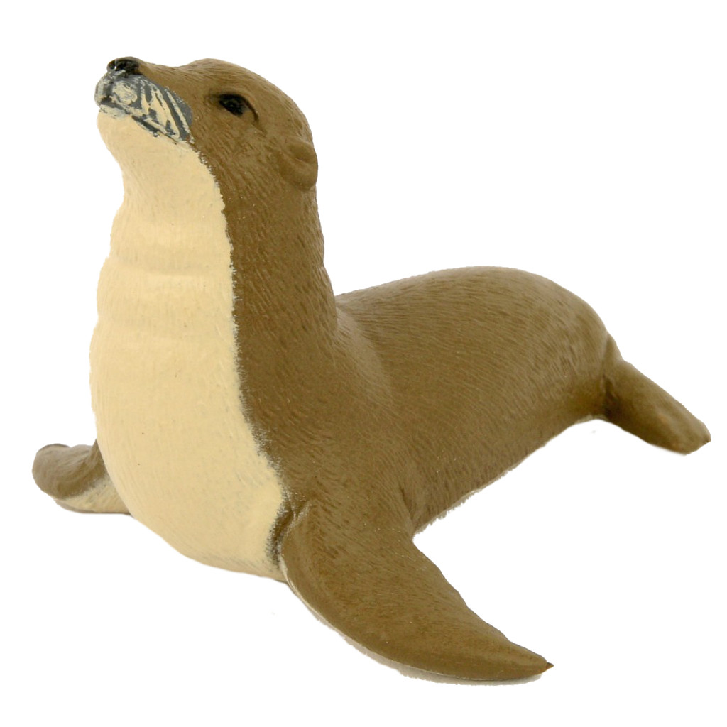 Small Australian Sea Lion