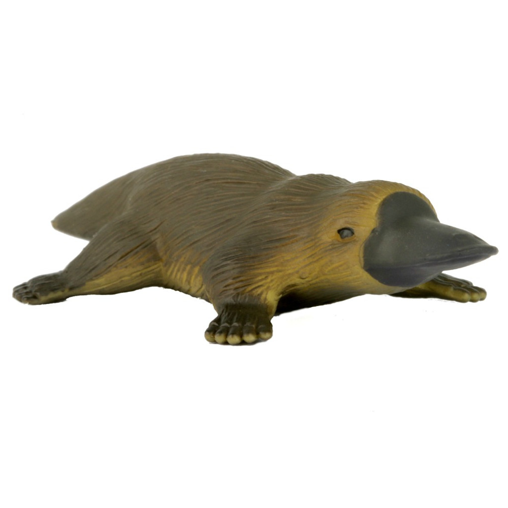 Science and Nature Small Platypus