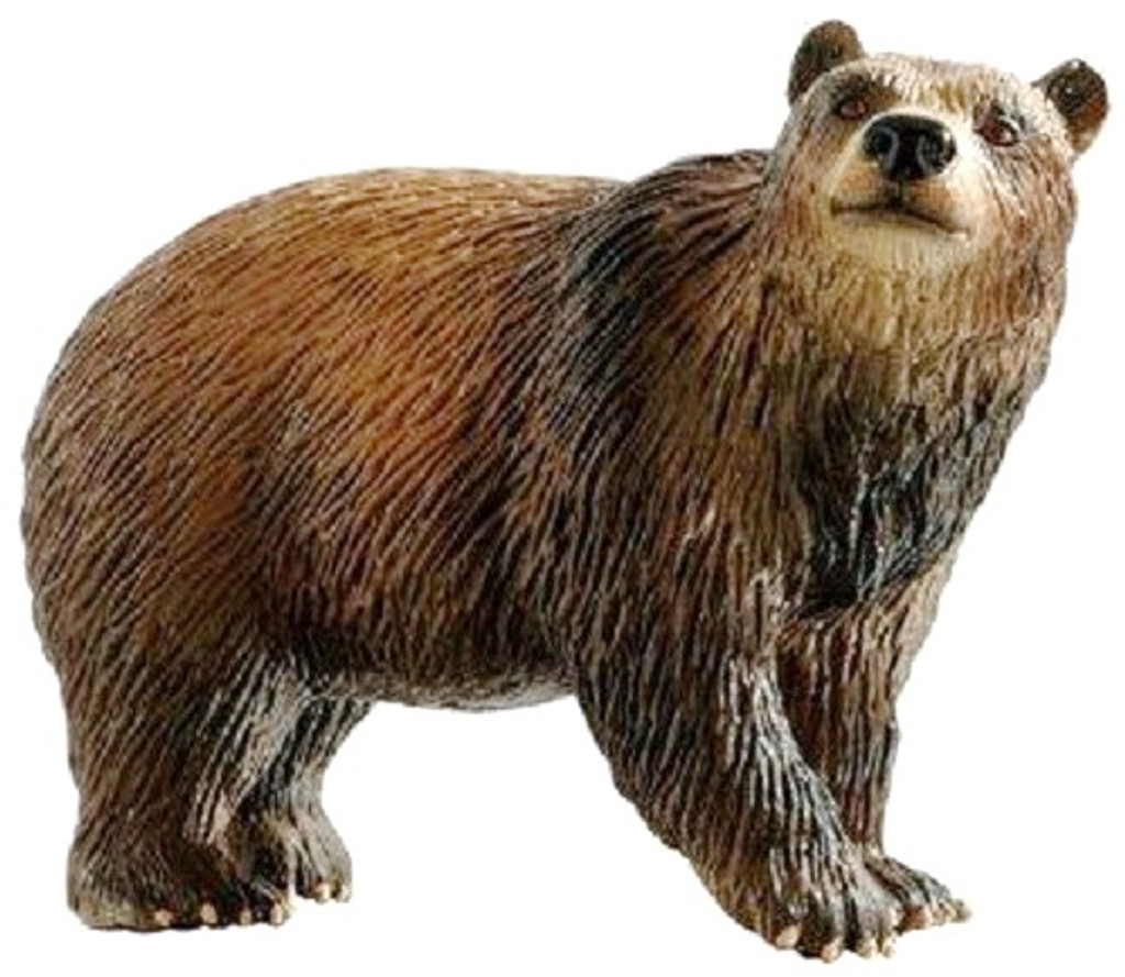 Brown Bear 2016