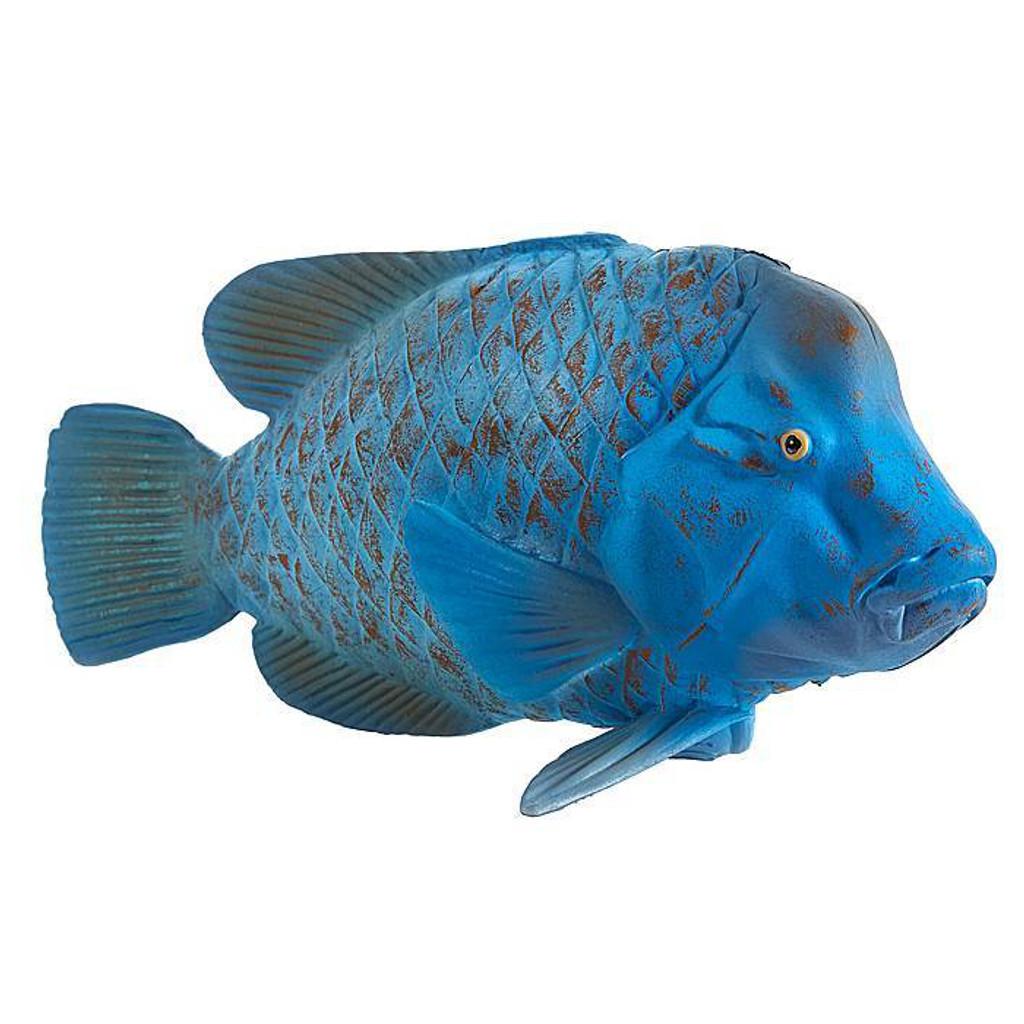 Blue Grouper (Groper)