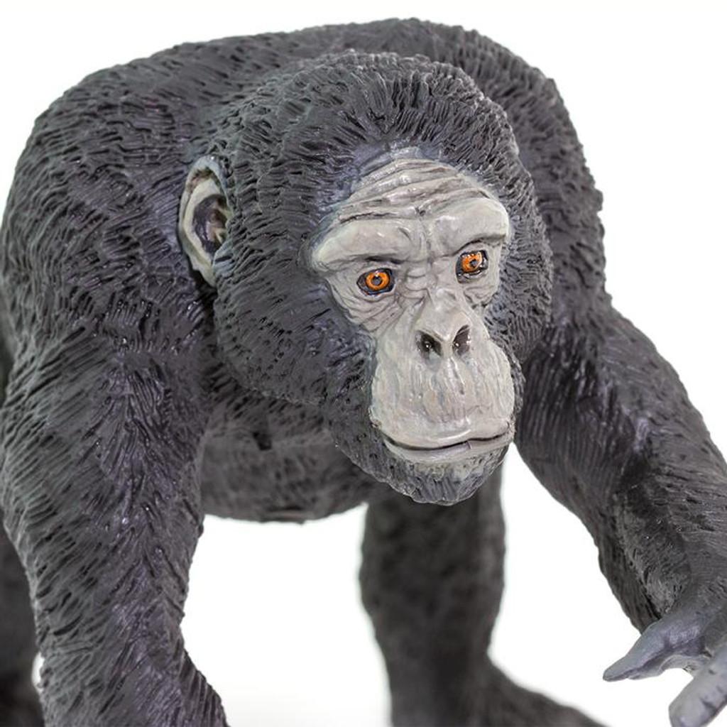 Chimpanzee Jumbo