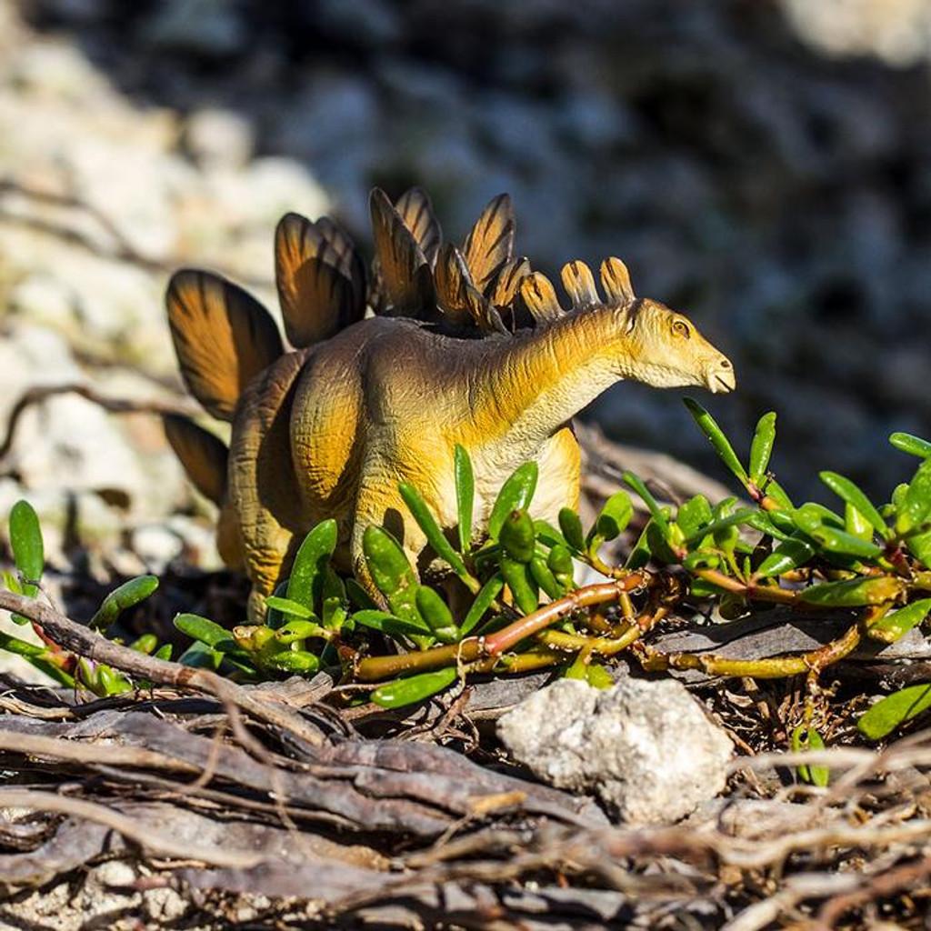 Stegosaurus Safari