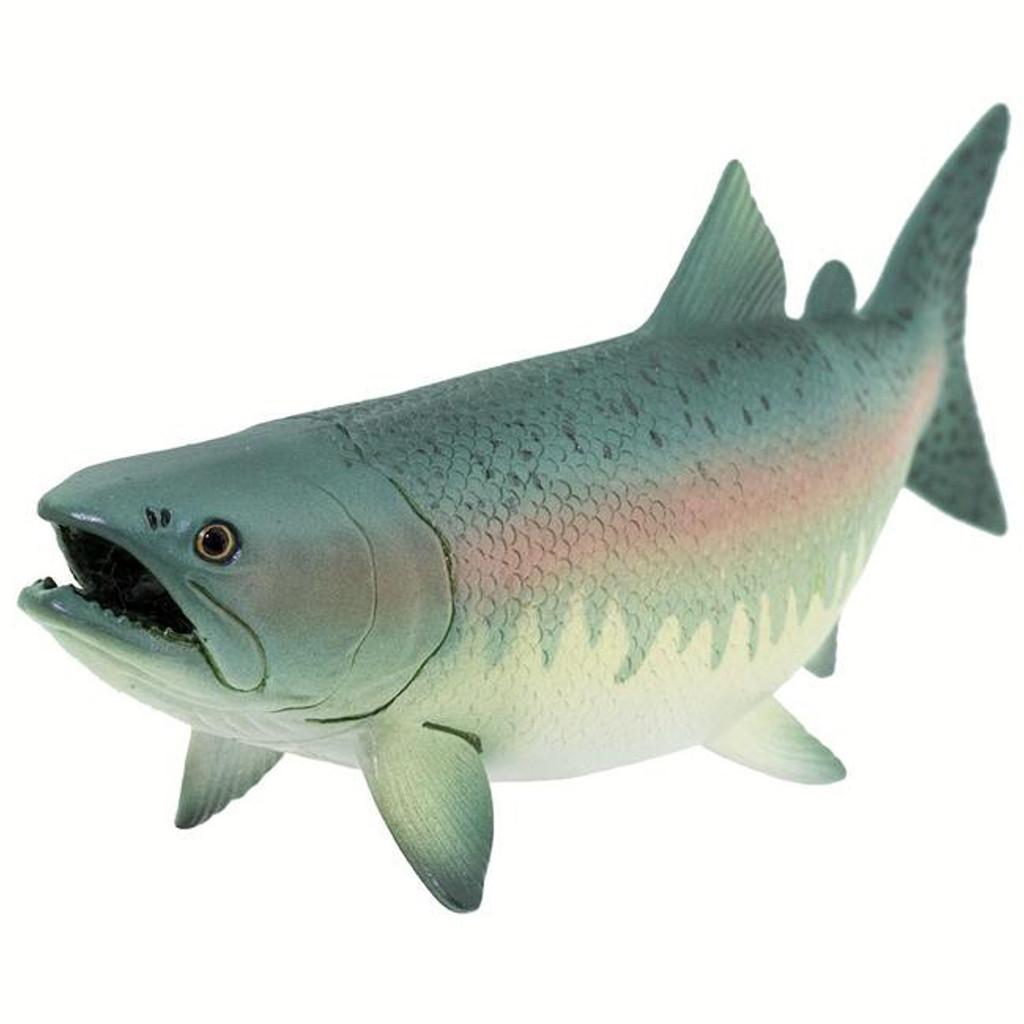 Salmon IC