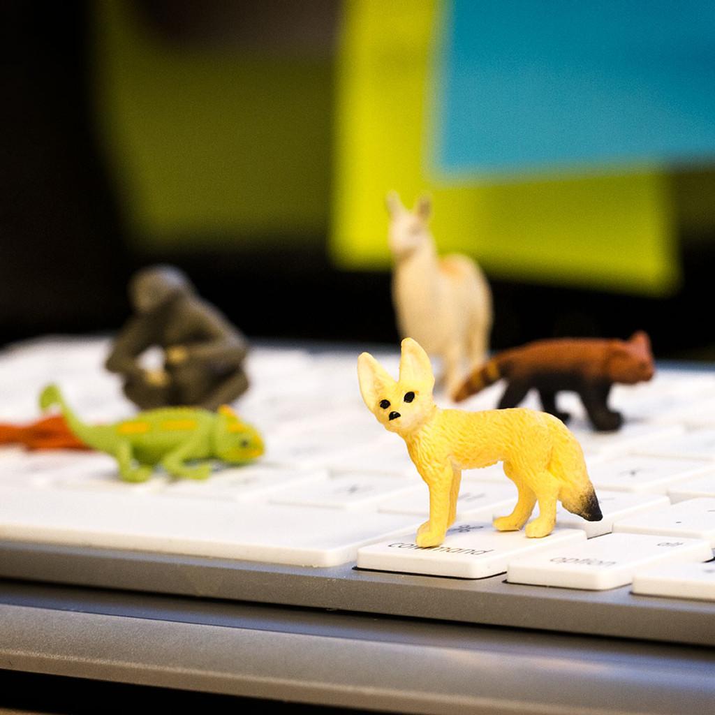 Mini Fennec Foxes