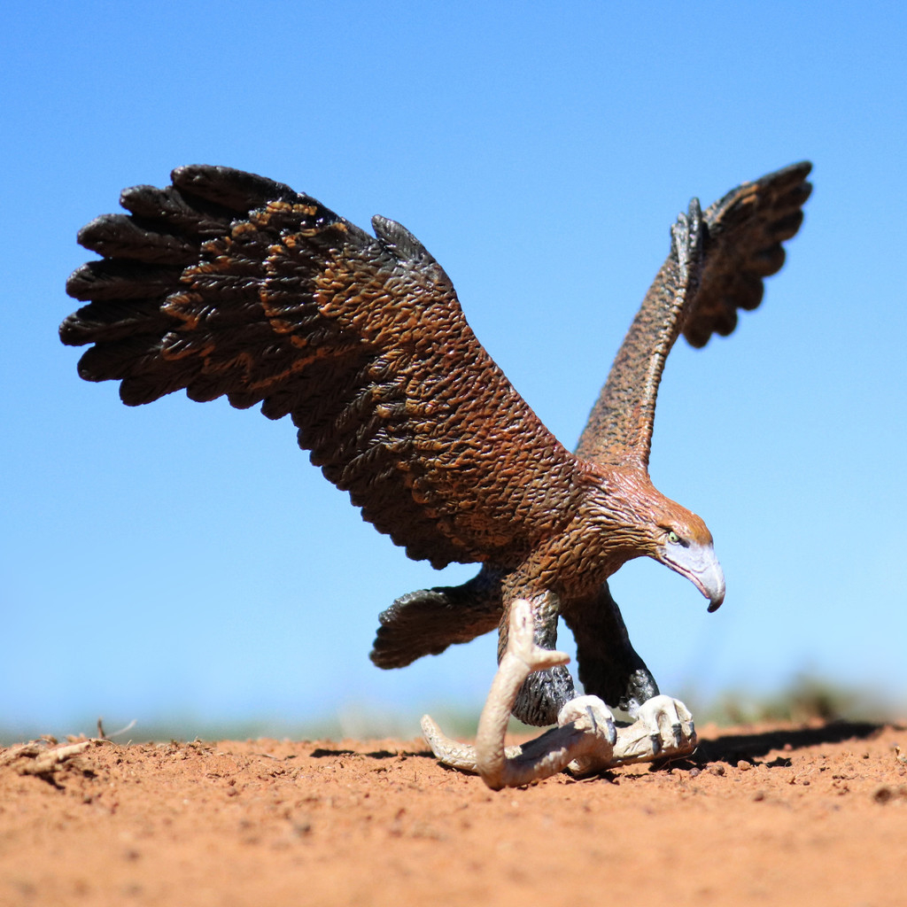 Wedgetail Eagle with Brown Snake