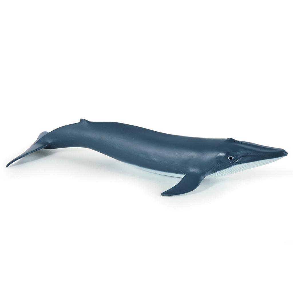 Blue Whale Calf