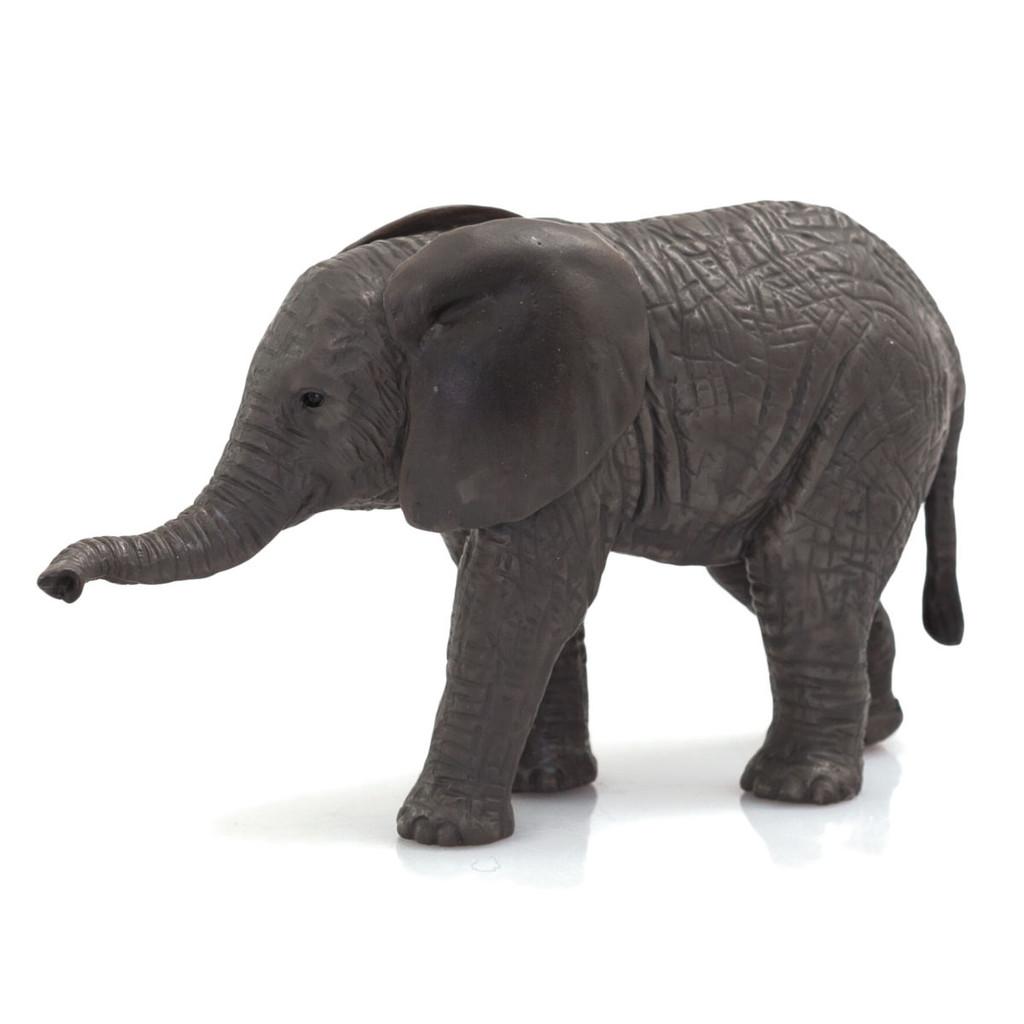 Mojo African Elephant Calf