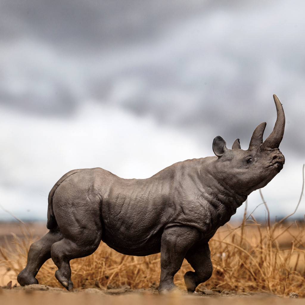 PNSO Chata the Black Rhinoceros outdoors
