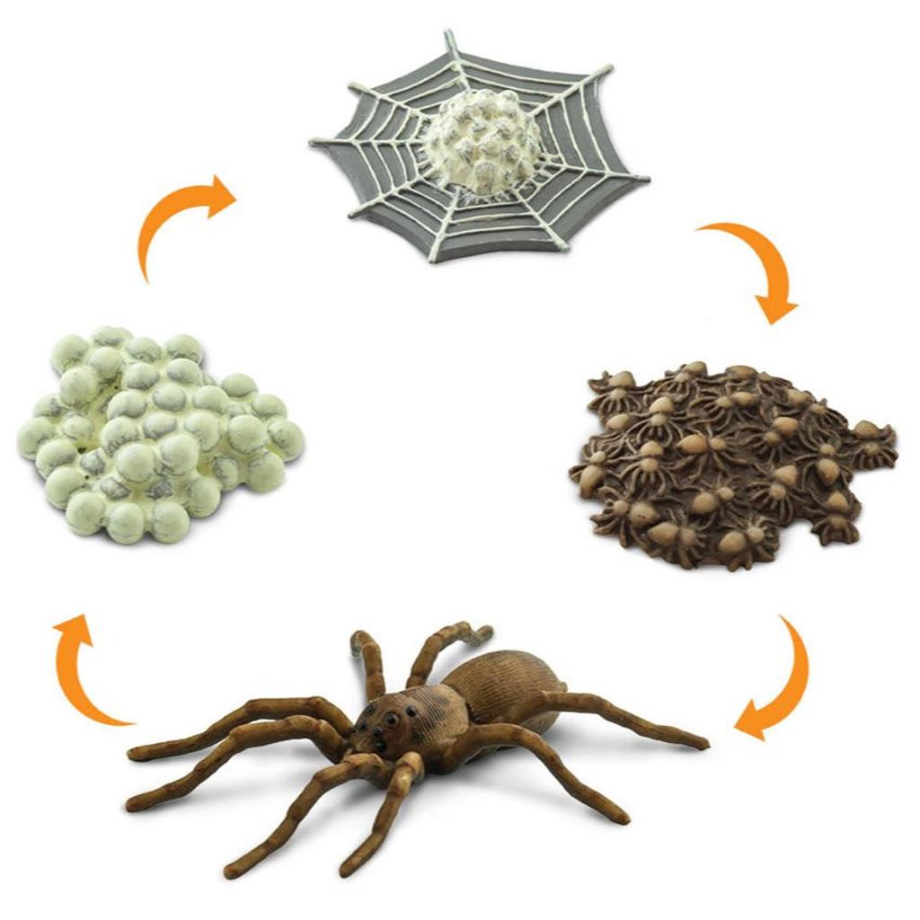Safari Ltd Life Cycle Of A Spider