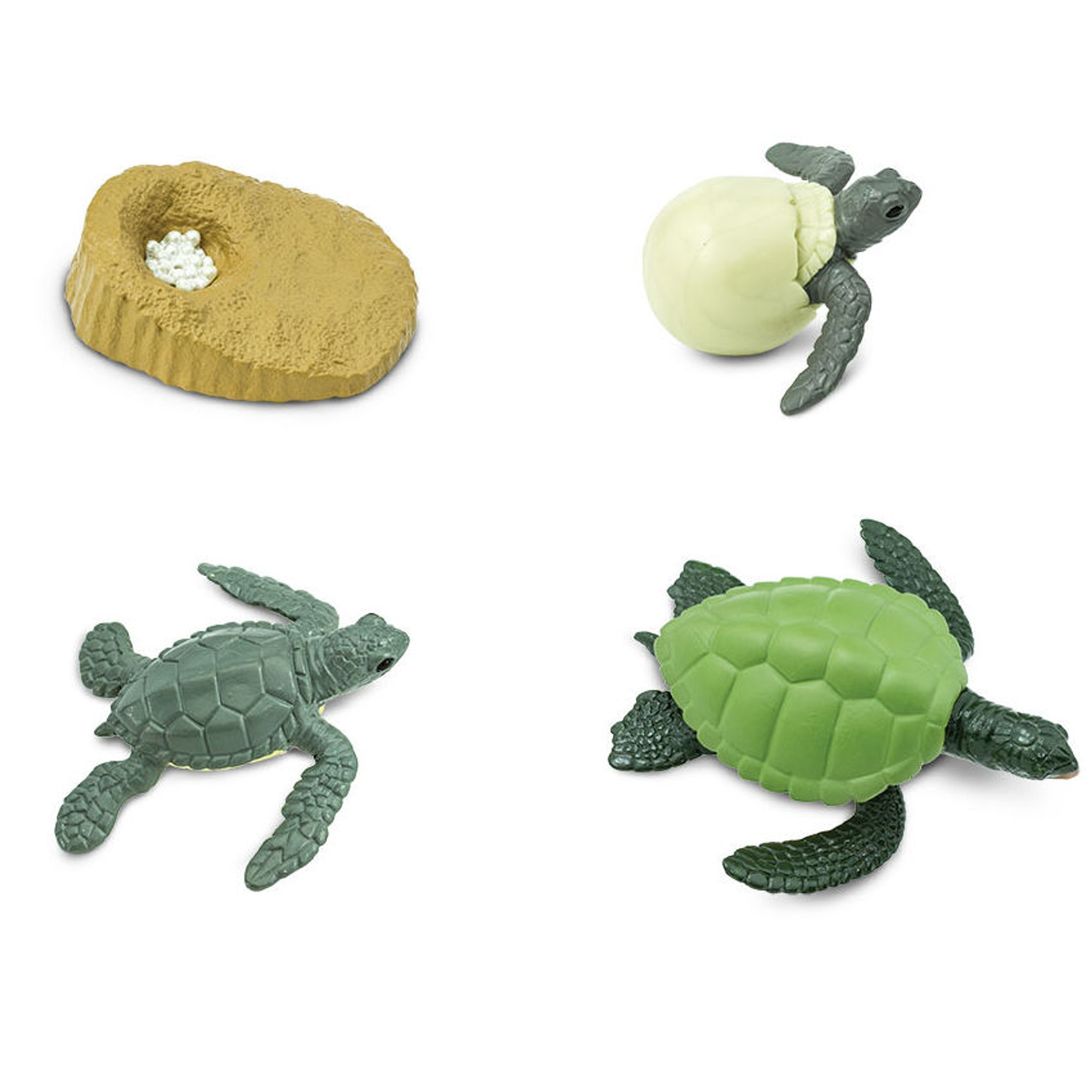Safari Ltd Life Cycle Of A Green Sea Turtle 662316