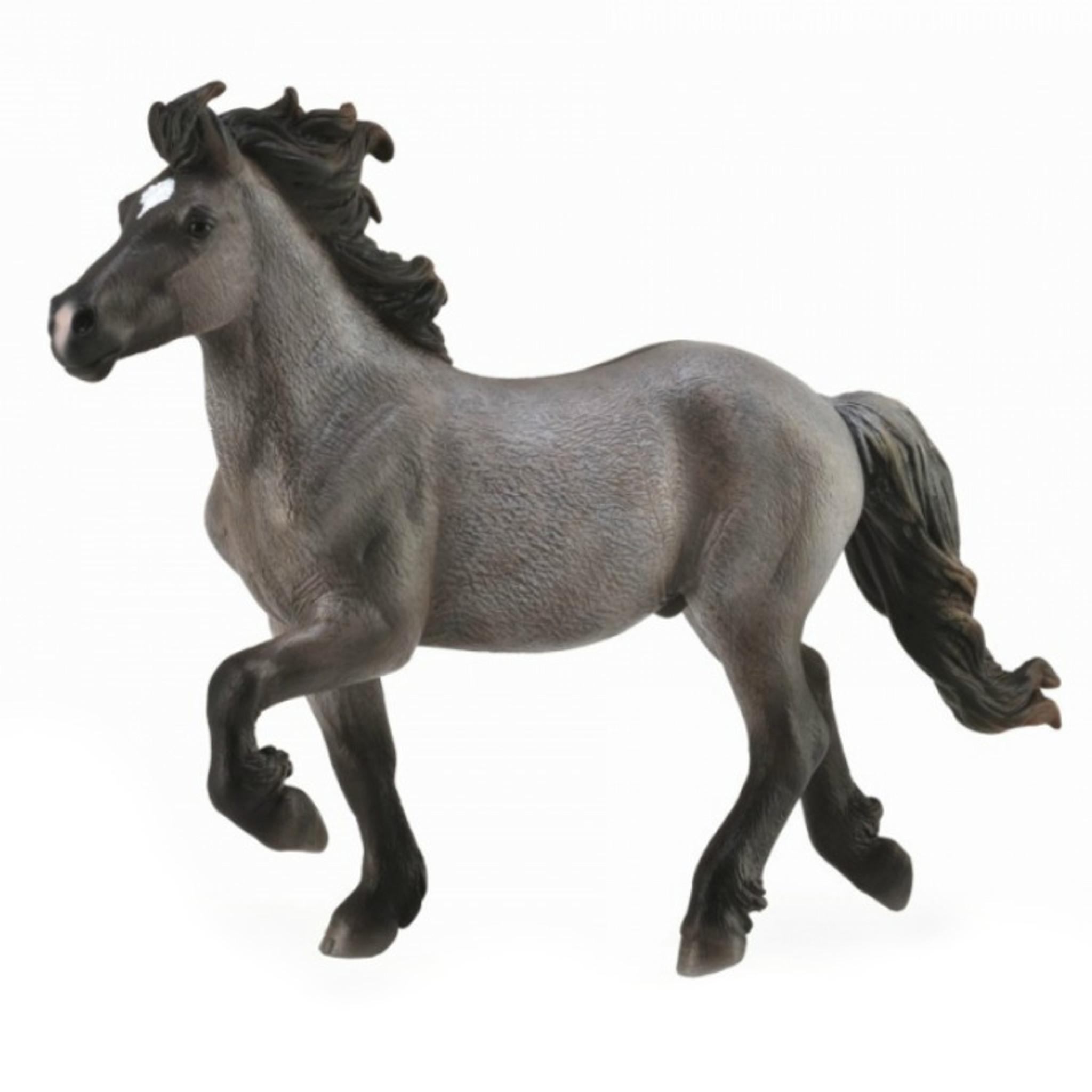 Brown Dun Collecta Fjord Stallion