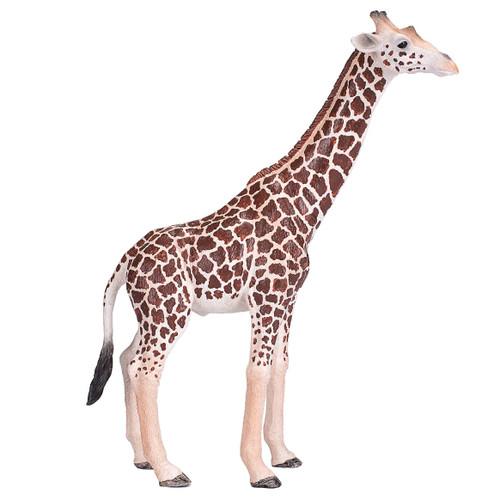 Mojo 2020 Giraffe Male
