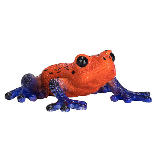 Mojo Poison Dart Tree Frog front view