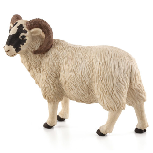 Mojo Black Faced Ram