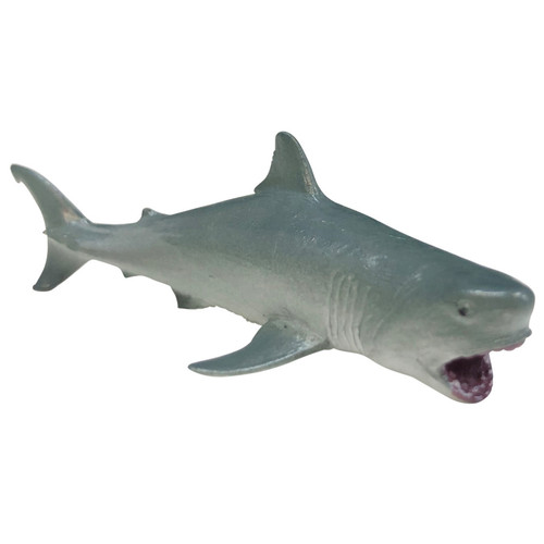 Science and Nature Small Great White Shark